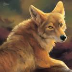 Glancing Coyote - SpeedPaint