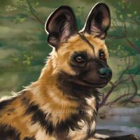 Wild Dog Resting - SpeedPainting by GoldenDruid