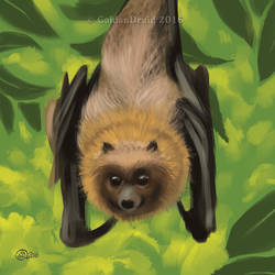Flying Fox - SpeedPaint