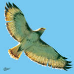 Wingspan - SpeedPaint