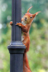 Squirrel on a pole