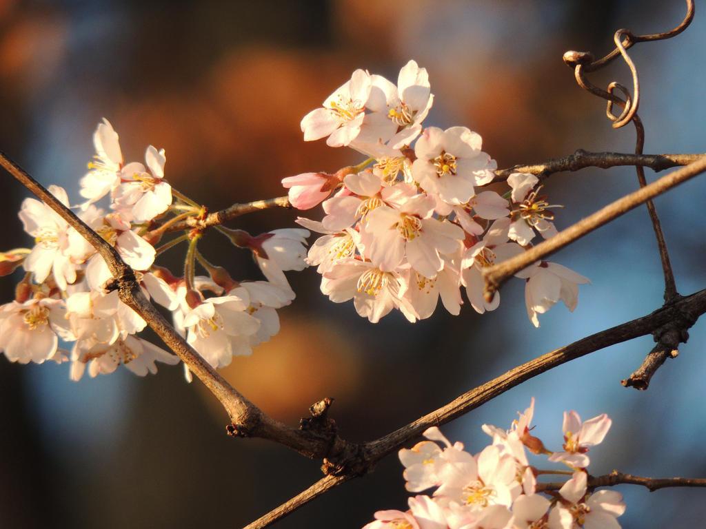 Spring Blooms by howlingghostwolf
