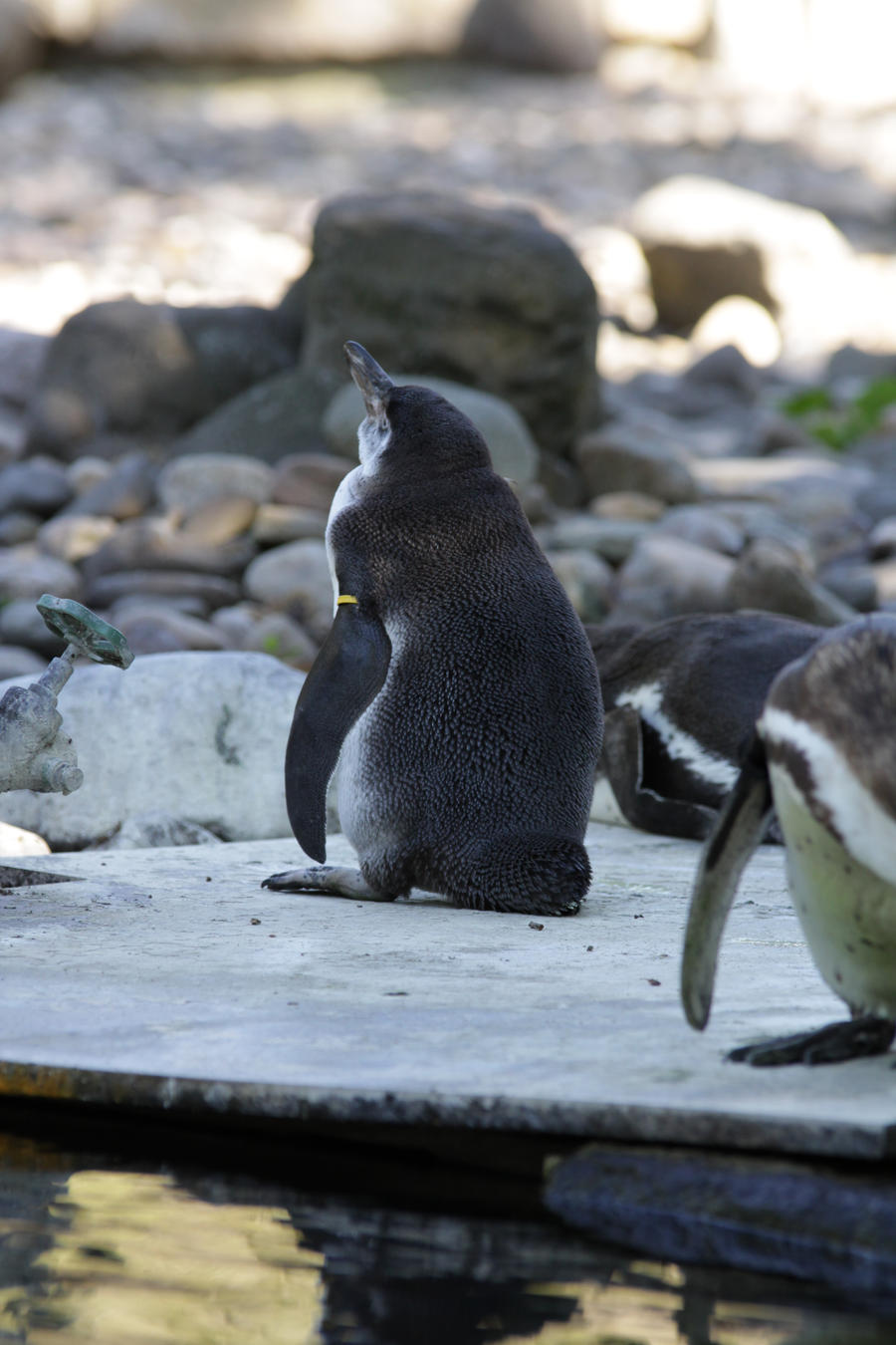 Penguin 2 by almudena-stock