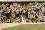 Door with wisteria 1