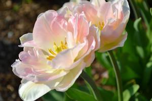 In bloom... by Kiwi29