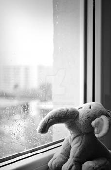 Watching the rain drops fall
