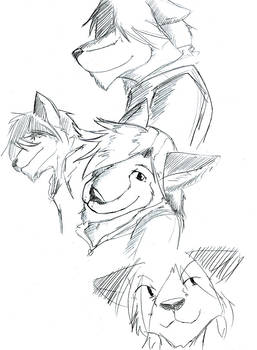 sketches derp