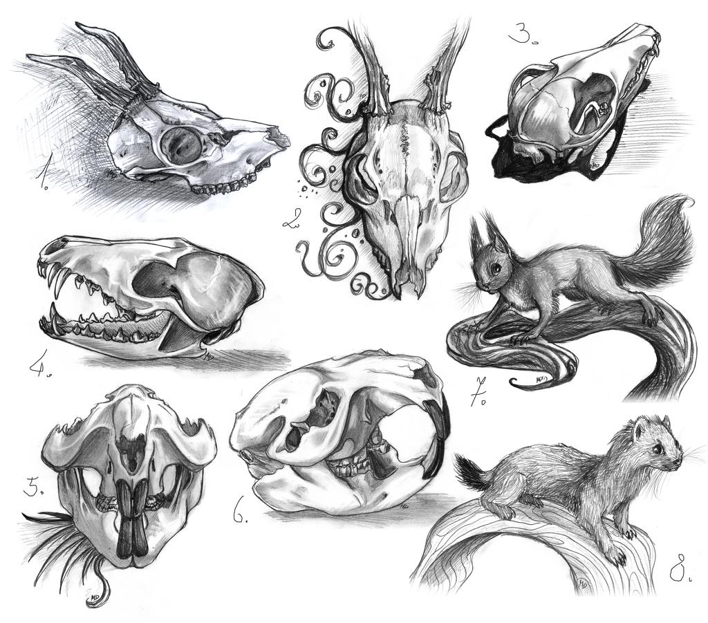 animal anatomy studies so far by gonedreamer on DeviantArt