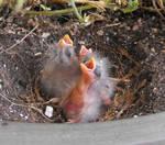 Baby birds outside my door
