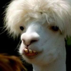 EternallyXIII's Profile Picture