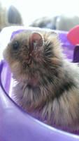 Puffy Fluffy