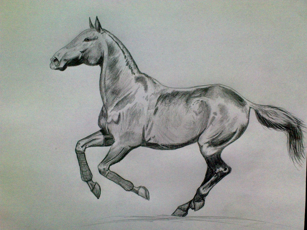 how to draw a horse cantering