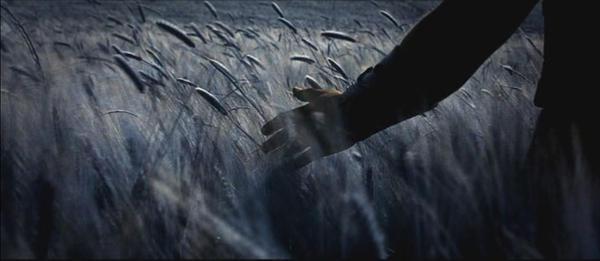 ♕ SPIRIT BRINGERS: EMPYREAN REALM. (SAGA DE AMAGI) - Página 7 Gladiator_wheat_by_thecaca
