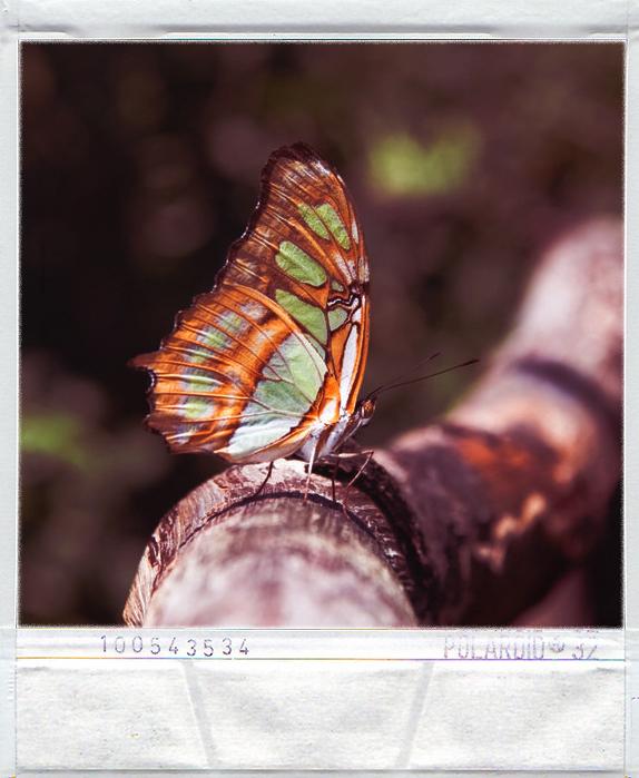 Polaroid Style 4 by N74