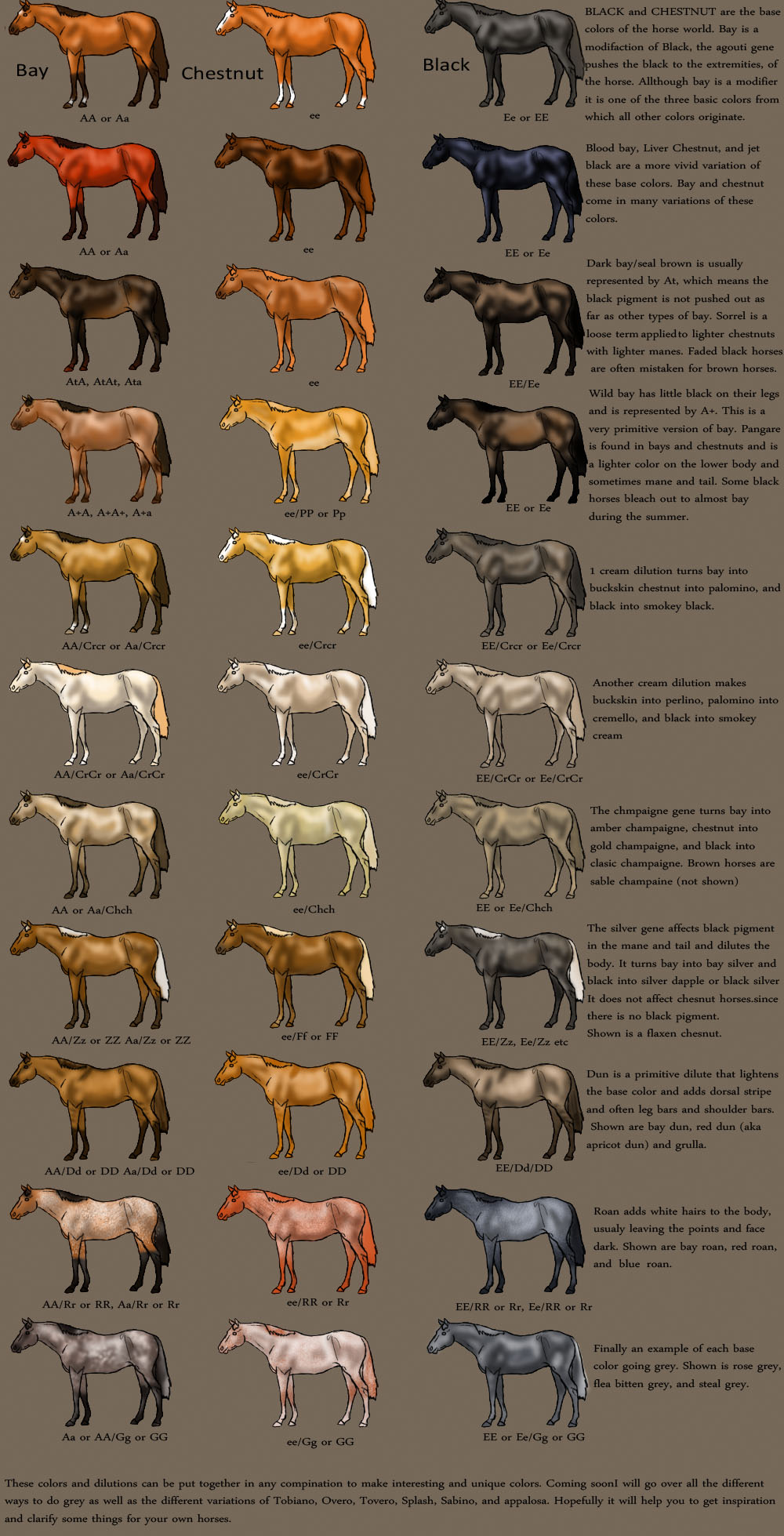 horse color chart by magicwindsstables on deviantart