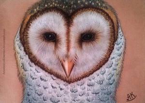 Lovely barn owl