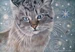 Cat in winter fairy tale