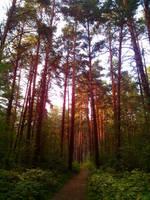 Amazing forest by AnastasiyaKosenko