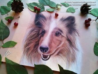 Commission - Beautiful dog