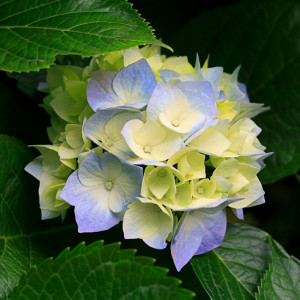 Flowersunshine's Profile Picture