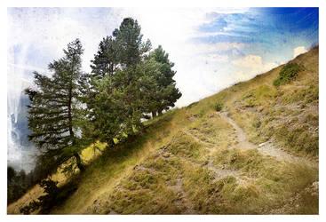 A calm path by photoctet