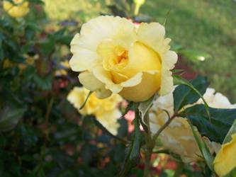 rosebuds8 by Electryonemoongoddes