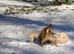 White Christmas Dog Fight