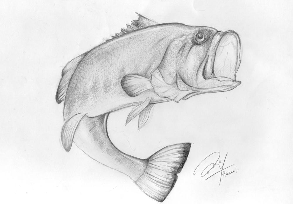 largemouth bass sketch by haizeel on deviantart