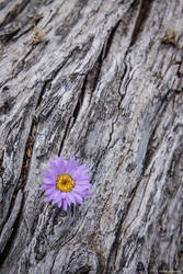 Purple Flower in Fallen Tree