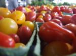 Li'l Tomatoes