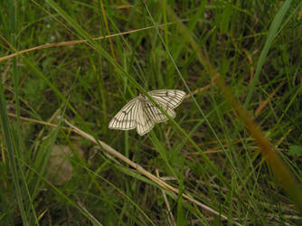 butterfly 2 by khetra