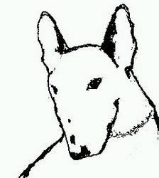 Bull terrier Portrait by overdrive