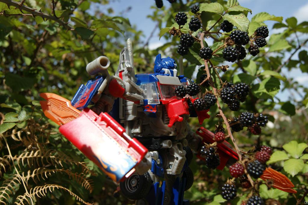 Harvesting Blackberries by Blackwitch31