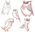 More owls