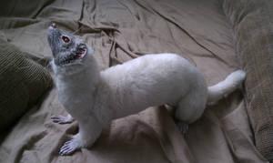 Poseable ferret art doll