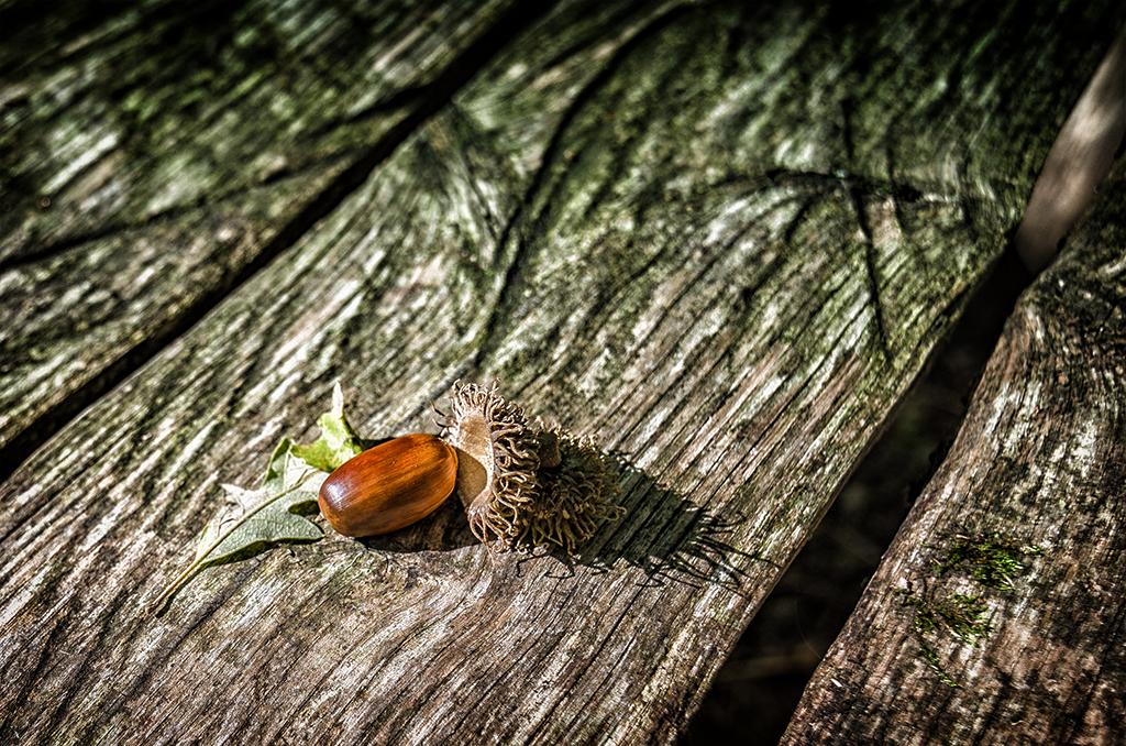 Falling acorn by bullone65