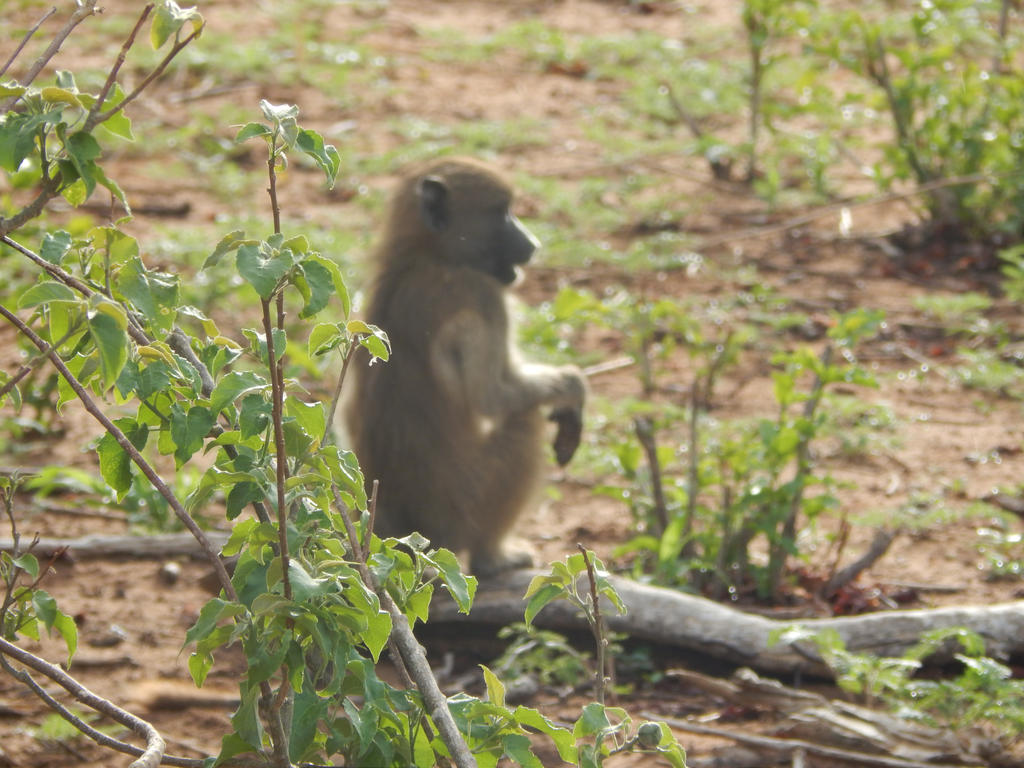 Little Monkey by Trapanzemia
