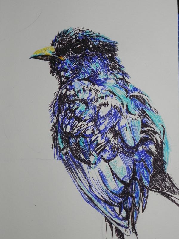 W.I.P- Drongo Cuckoo by kDdabous
