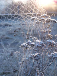 Frost and sun 5 by fotokhajiit