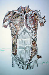 Anatomy by Kle-E