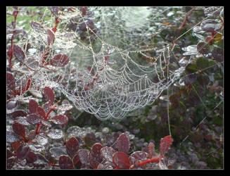 Rainy Web by Tylek