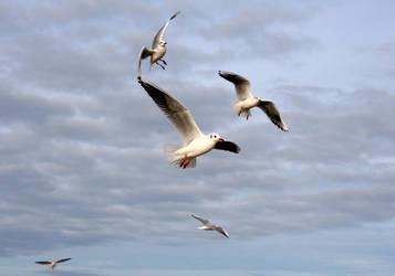 Seagulls by Tylek