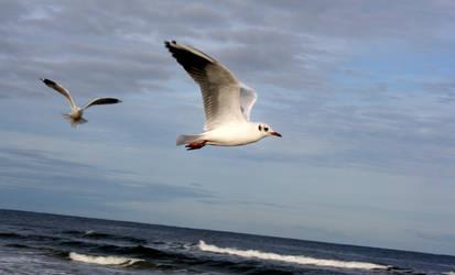 Seagulls 2 by Tylek
