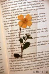 flower bookmark by Tylek