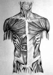 Anatomy's study by Dnaland