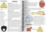 Ninetales Pokemon Guide