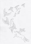Birds: Racing by pandemoniumfire