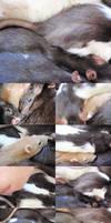 Rat Pile VII by pandemoniumfire