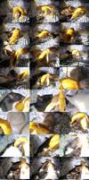 Banana Rats by pandemoniumfire