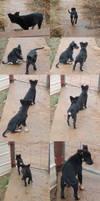 Puppies II